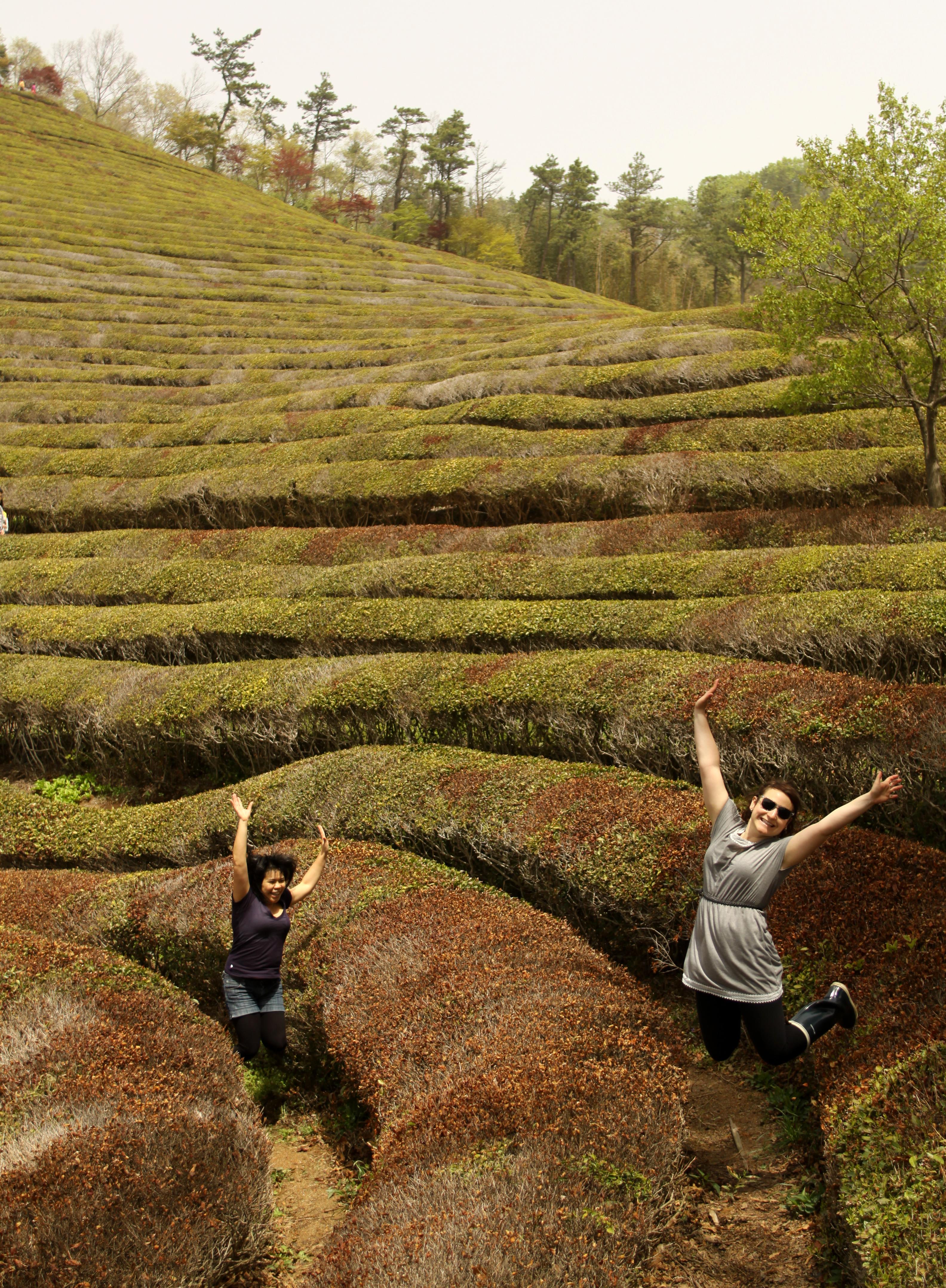Boseong Green Tea Extravaganza